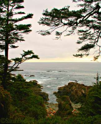 b2ap3_thumbnail_Hiking-Guide-Wild-Pacific-Trail-Ancient-Cedars-Vista-Sarah-BeeWell.jpg