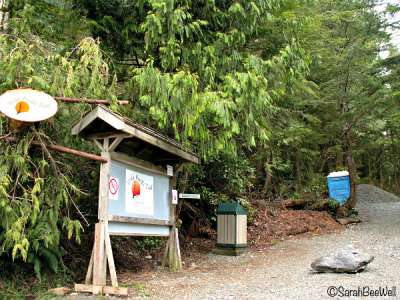 b2ap3_thumbnail_Hiking-Guide-Wild-Pacific-Trail-Ancient-Cedars-entrance-Sarah-BeeWell.jpg