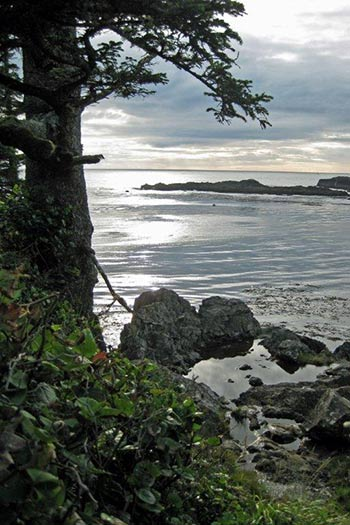 ucluelet-Mild-Weather-Rainforest-and-Ocean